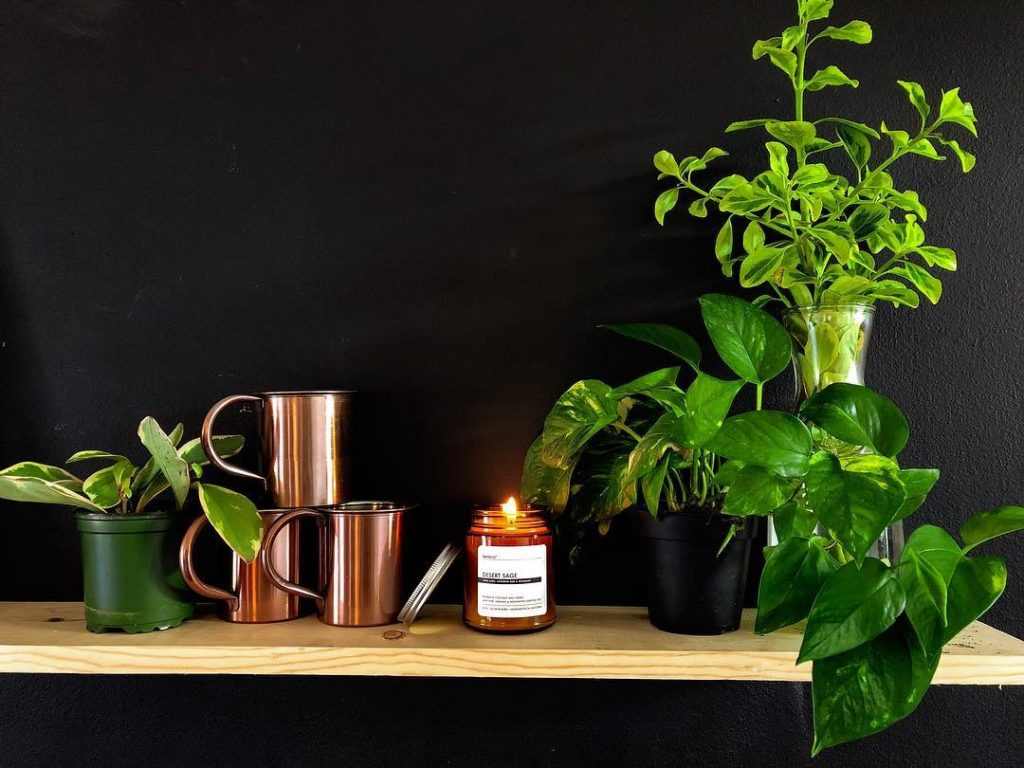 Terralite coconut wax candles made with pure essential oils and plant extracts.